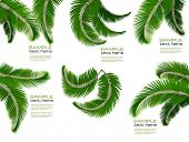stock photo of vegetation  - Set of palm leaves on white background - JPG