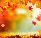 picture of sunny season  - Moody autumn background with falling leaves on wooden planks - JPG