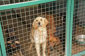 stock photo of stray dog  - Abandoned dogs in dogs shelter is waiting for a new owners - JPG