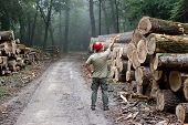 foto of deforestation  - Lumberjack with helmet standing in front of stacked trunks in forest - JPG