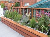 pic of planters  - Rooftop garden in urban setting with planters - JPG