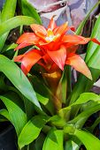 picture of bromeliad  - Bromeliad simulated tropical forest of South America - JPG