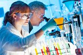 pic of scientist  - Attractive young female scientist and her senior male supervisor looking at the cell colony grown in the petri dish in the life science research laboratory - JPG