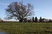 stock photo of church-of-england  - Winter landscape with leafless tree - JPG