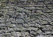 Bark Texture poster