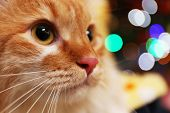stock photo of lovable  - Portrait of lovable red cat on bright background - JPG
