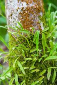 picture of parasite  - Parasitic plants are beautiful wood in Thailand - JPG