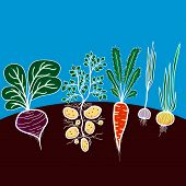 picture of carrot  - Illustration with growing vegetables  - JPG
