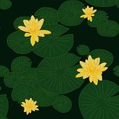 pic of water lilies  - Yellow Lotuses in the pond - JPG