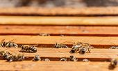 stock photo of working animal  - Bees on honeycomb frames in an open beehive - JPG