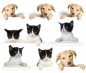 picture of puppy kitten  - puppy and kitten set on a white background - JPG