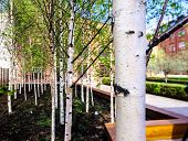 image of spring-weather  - Small young birch in spring city park sunny weather Moscow Russia - JPG