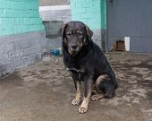 picture of stray dog  - Stray dog hide from the rain - JPG