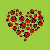 foto of ladybug  - The heart of a collection of ladybugs on green background - JPG