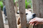 image of stray dog  - Stray dog behind the corral of a dog refuge and the hand of a girl petting it - JPG