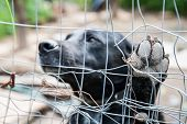 image of dog-house  - Close up view of the paw of a stray dog behind the corral of a dog refuge - JPG