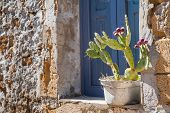 image of house-plant  - Rustic metal vase with a cactus plant on a window sill of a typical stone house in the small fishing village Marzamemi East Sicily - JPG