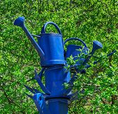 picture of blue things  - Blue watering cans made of metal stacked on a blue post amidst a green bush - JPG