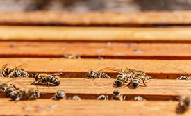 stock photo of honeycomb  - Bees on honeycomb frames in an open beehive - JPG