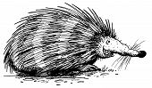 pic of rabies  - illustration of a happy hedgehog doing his thing - JPG