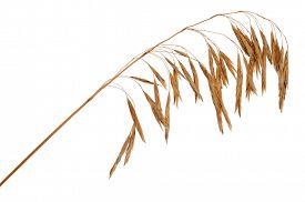 picture of dry grass  - Dry grass - JPG