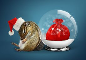 picture of chipmunks  - Funny animal chipmunk dressed as santa with snow ball christmas concept - JPG