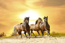 stock photo of wild horse running  - a group of beautiful horses running under late sunset sky - JPG