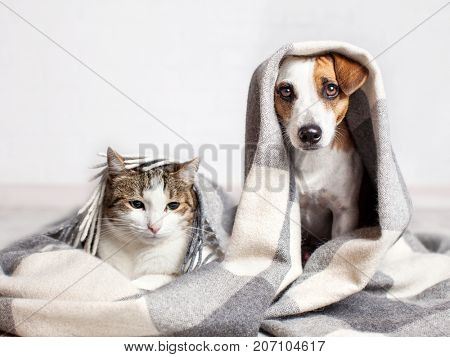 poster of Dog and cat under a plaid. Pet warms under a blanket in cold autumn weather
