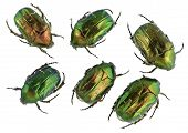 Emerald Gold Bugs Set
