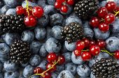 Mix Berries And Fruits. Ripe Blackberries, Blueberries, Blackcurrants, Red Currants. Top View. Backg poster