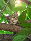 Portrait Of A Beautiful Cute Cat Sitting On A Tree And Looking Into The Camera. Kitty Surrounded By  poster