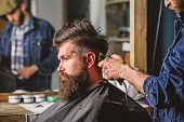 Barber Styling Hair Of Brutal Bearded Client With Clipper. Barber With Hair Clipper Works On Hairsty poster