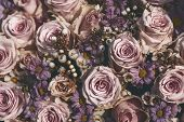 Top Shot Of Fading Pink Roses In Summer poster