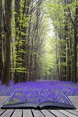 picture of harebell  - Creative concept pages of book Beautiful carpet of bluebell flowers in Spring forest landscape - JPG