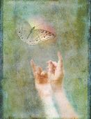pic of moth  - Conceptual photo - JPG