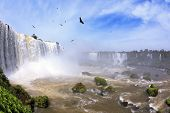 Waterfalls and birds in Brazil. Black Andean condors fly over the foamy waterfalls of Iguazu. The pi