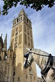 Horse In Front Of The Seville Cathedral
