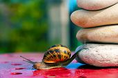 picture of olympiad  - cute funny snail from crossing an obstacle - JPG
