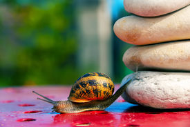 picture of olympiade  - cute funny snail from crossing an obstacle - JPG
