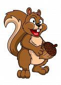 pic of acorn  - Funny cartoon squirrel holding acorn - JPG