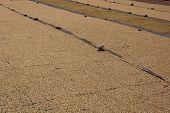 foto of spit-roast  - Drying Coffee Beans At The Farm Near Lake Atitlan - JPG