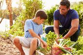 stock photo of 11 year old  - Father And Son Working On Allotment Together - JPG