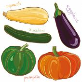 picture of brinjal  - Vector colorful freehand illustration of vegetables - JPG