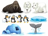 stock photo of north-pole  - Illustration of different animals from north pole - JPG