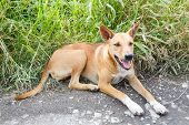 picture of stray dog  - Close up dirty stray dog sitting on grass beside bumpy road - JPG