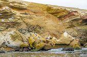 stock photo of ica  - Islas Ballestas - JPG
