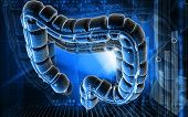 stock photo of intestines  - Digital illustration of large intestine in colour background - JPG