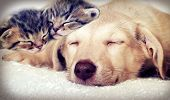 foto of puppy kitten  - puppy and kittens sleeping in a retro style - JPG