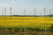 image of alfalfa  - power lines in a field of alfalfa in the agricultural provinces of Bulgaria - JPG