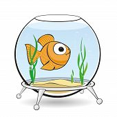picture of goldfish  - Lonely Goldfish swim in an aquarium between algae - JPG